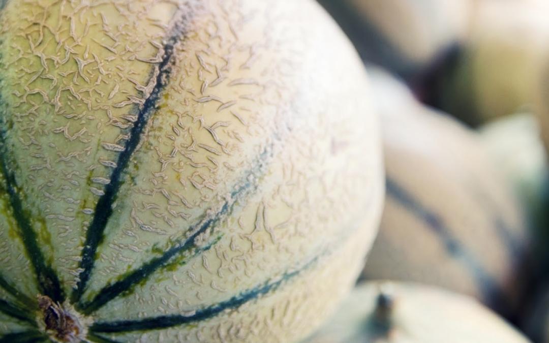 Comment bien choisir son melon ?