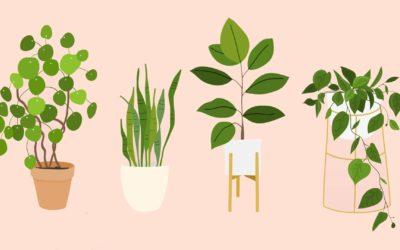 Les plantes pour les gens nuls en plantes